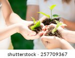 children holding young plant in ... | Shutterstock . vector #257709367
