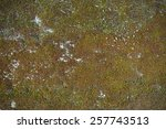 Texture Of Moss On Concrete.