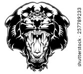 pantera. hand drawn isolated on ... | Shutterstock .eps vector #257789233