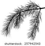 Illustration With Pine Branch...