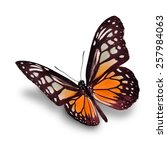 beautiful orange butterfly... | Shutterstock . vector #257984063