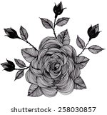freehand drawing rose | Shutterstock . vector #258030857