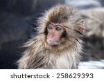 little snow monkey at the... | Shutterstock . vector #258629393