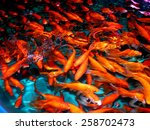 Goldfish From Asia  Central...