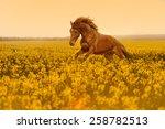 Beautiful Strong Horse...