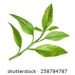 lemon twig isolated on white | Shutterstock . vector #258784787