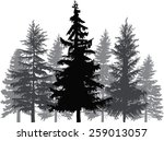 Illustration With Fir Trees...