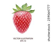 strawberry isolated watercolor... | Shutterstock .eps vector #259064777