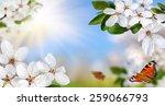 Springtime Paradise With White...