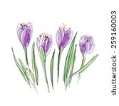 Crocuses Seamless Pattern....