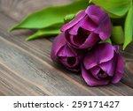 Purple Colored Tulip Flowers O...