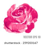 Stock vector pink rose watercolor hand painted isolated on white vector format eps 259203167