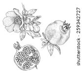 pomegranate | Shutterstock .eps vector #259342727
