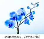 blue orchid on blue background | Shutterstock . vector #259453703