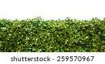 Horizontal Shot Of Green Hedge...