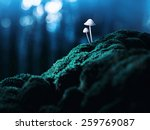 Постер, плакат: Amanita phalloides Deadly poisonous