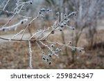gloomy winter landscape | Shutterstock . vector #259824347