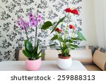 live potted plants in pots in... | Shutterstock . vector #259888313