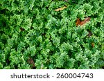 moss green for textures and...   Shutterstock . vector #260004743