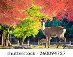 nara deer roam free in nara... | Shutterstock . vector #260094737