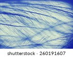 Bird Feather Under The...