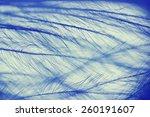 Bird Feather Under The...