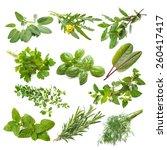 kitchen herbs collection... | Shutterstock . vector #260417417