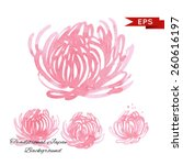 pink chrysanthemum illustration ... | Shutterstock .eps vector #260616197