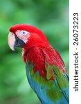 parrot   Shutterstock . vector #26073223