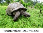 Giant Tortoise  Geochelone...