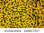 Yellow Marigolds For Wallpaper...