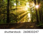 beautiful sunny morning in the... | Shutterstock . vector #260833247