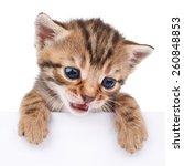 brown kitten with empty board... | Shutterstock . vector #260848853