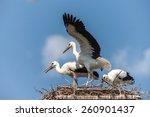 white storks in the nest...   Shutterstock . vector #260901437