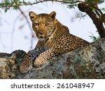 leopard on the tree. tanzania.... | Shutterstock . vector #261048947