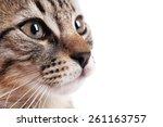 portrait of cute kitten... | Shutterstock . vector #261163757