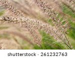 Small photo of Aflutter grass