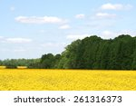 Canola Fields Of Indiana