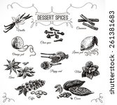 vector hand drawn set with... | Shutterstock .eps vector #261381683