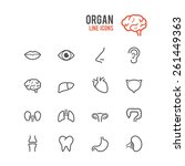 organ icon set. vector... | Shutterstock .eps vector #261449363
