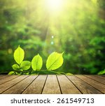 beautiful sunlight in the... | Shutterstock . vector #261549713