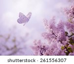 Beautiful Butterfly And Flowers
