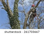 An Arborist Using A Chainsaw T...