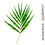 Single Palm Leaf Isolated On...