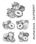 hand drawn nuts | Shutterstock .eps vector #261958997