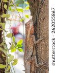 Small photo of agamidae, lizard on tree, conceal in nature