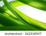 Green Grass  Plants Background...