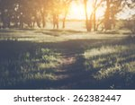 blurred nature background with... | Shutterstock . vector #262382447
