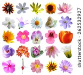 flowers collection | Shutterstock . vector #262532927