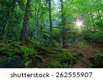 forest landscape. springtime.... | Shutterstock . vector #262555907